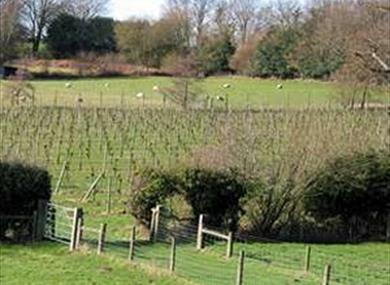 Barnsgate Manor Vineyard
