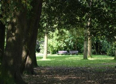 Benches under the trees at Hotham Park