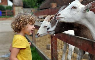 Zoos & animal parks in South East England