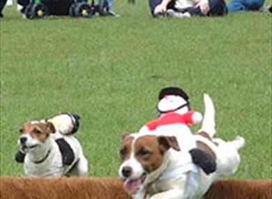 Thame Show - Terrier Racing