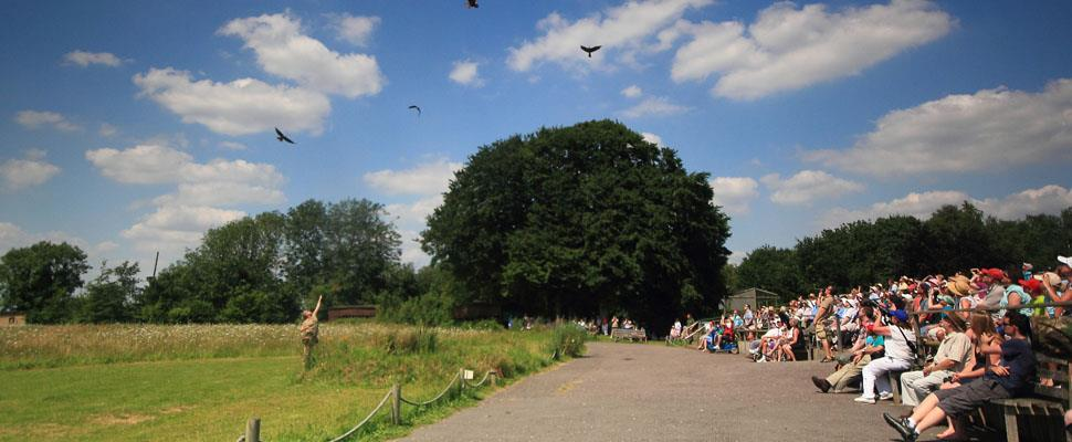 Win a family ticket to the Hawk Conservancy