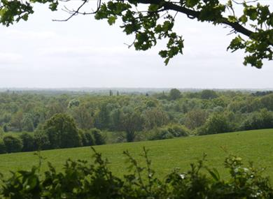 Petts Wood and Hawkwood