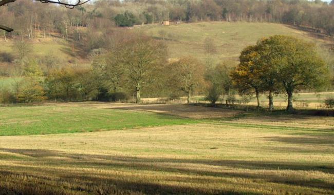 Abinger Roughs and Netley Park