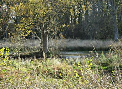 Bookham Common