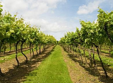 Biddenden Vineyards Ltd