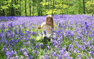 Enjoy a Bluebell Walk at Hole Park Gardens