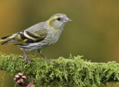 Birdsong Workshops at Bedgebury Pinetum