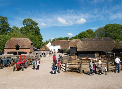 Manor Farm (Farm and Museum)
