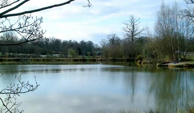 Frant Lakes Fishery