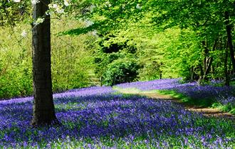 Bluebell Spectacular at Hole Park Gardens