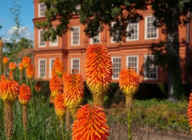 Red hot poker a Kew