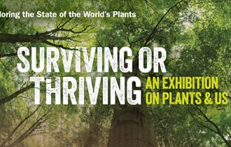 Surviving or Thriving – An exhibition on plants and us