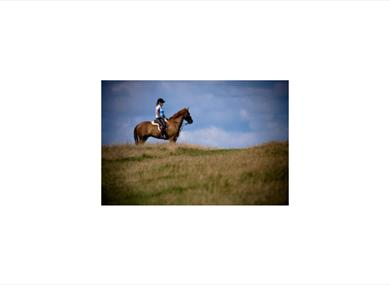 Sussex Equestrian Club