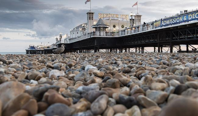 Is Brighton Pier Dog Friendly