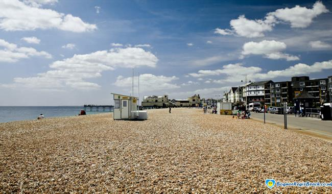 Wildlife Pictures From Bognor Regis To South Africa Are: Beach In Bognor Regis, West