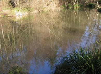 Horam Manor Farm Fishery