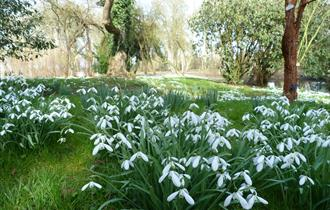 Snowdrop Season & Tours